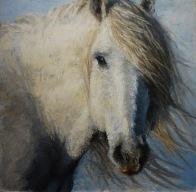 horse study lisa pecore oil on panel, 24x24